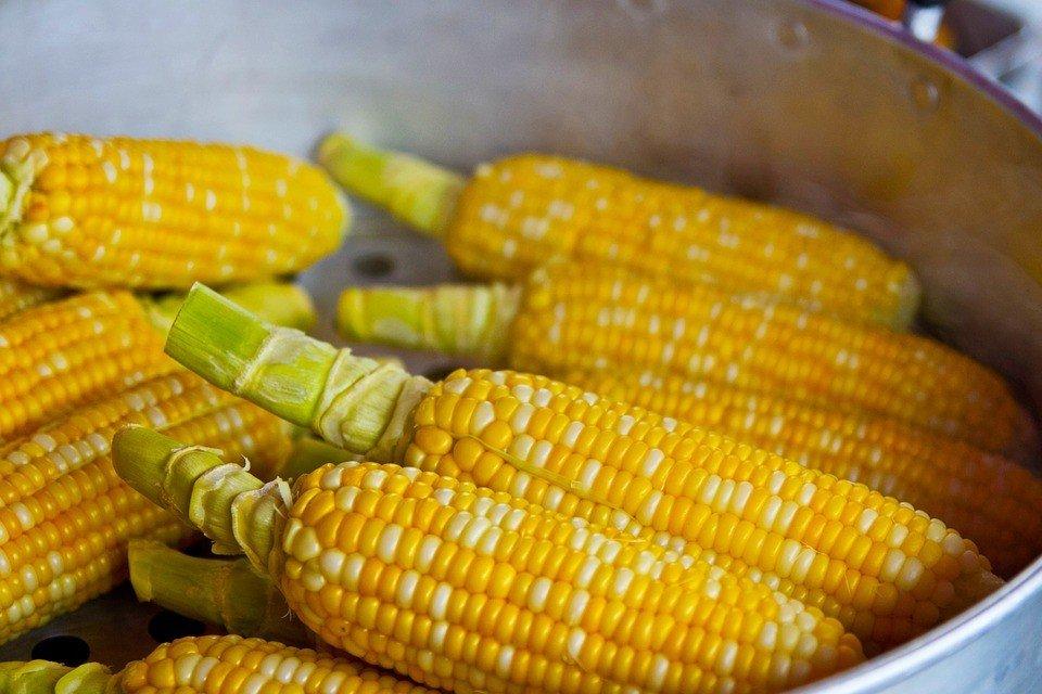 Можно ли есть кукурузу при диете: польза и вред
