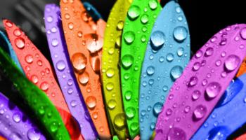 Легкая, как лепесток: основные принципы лепестковой диеты